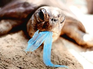 plastic bag turtule